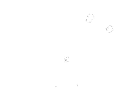 Scottsfield Pork